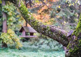 caisse en bois pour nourrir les oiseaux