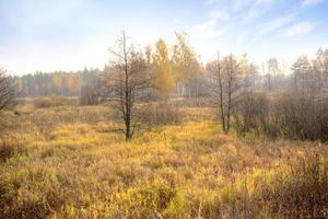 tourbière. l'automne