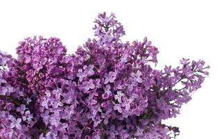 fond floral, isolé