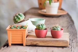 pot de cactus photo