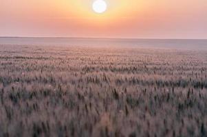 soirée dans la prairie