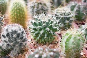 pot de cactus.