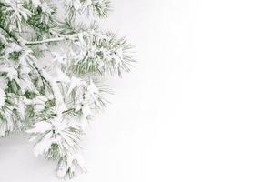 Branche d'arbre couvert de neige sur sol enneigé
