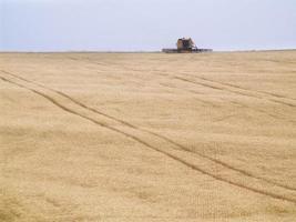 récolte de blé photo