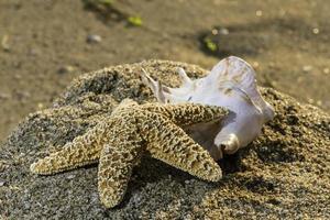 coquillages sur la plage photo