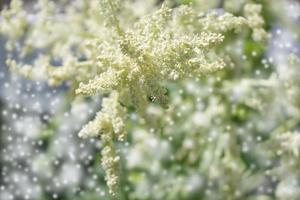 branche de graine - fond floral bokeh photo