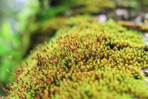 mousse dans les bois photo