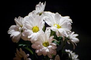 fleurs blanches sur fond noir photo