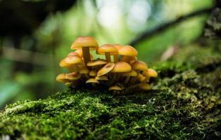 champignons sur l'arbre photo