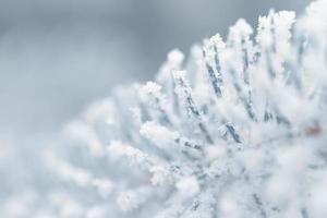 Brindilles de sapin givrées en hiver couvertes de givre