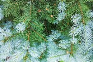 fond d'arbre de Noël. photo