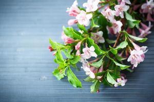 weigel belles fleurs roses photo