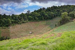 agriculture intégrée photo