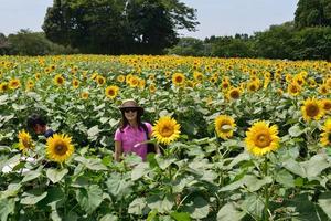 ferme de fleurs du soleil photo