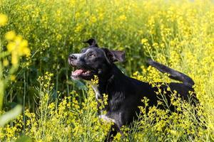 chien de ferme photo
