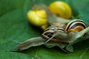 escargots de groupe en étroite connexion