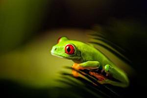 thème coloré naturel et frais avec grenouille exotique