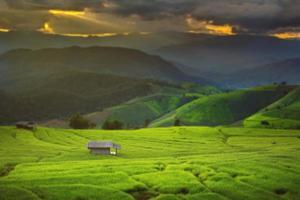 terrasse de riz