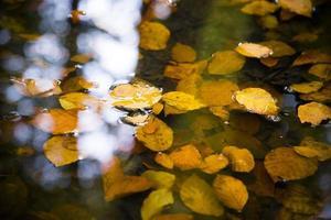 feuilles d'automne photo