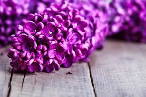 beau lilas sur fond de bois photo