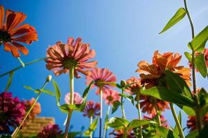 fleurs contre le ciel photo