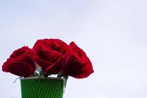 rose contre le ciel photo