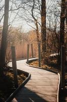 sentier en bois à travers les arbres