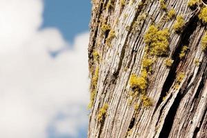 ciel de lichen