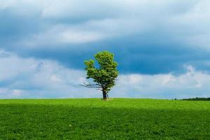 chêne et ciel photo