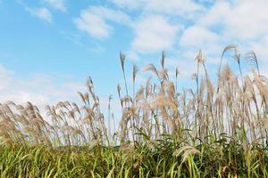 ciel et fleurs de mauvaises herbes photo