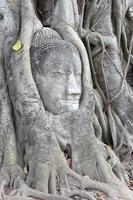 statue de Bouddha enlacée par les racines de l'arbre spirituel