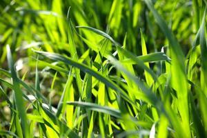 gros plan de brins d'herbe verte photo