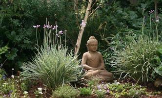 bhuddha photo