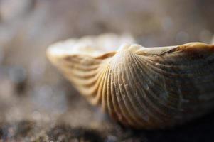 vie marine: coquille macro sur sable noir photo