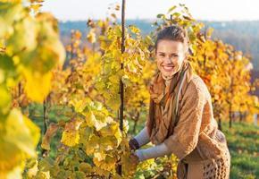 Portrait de jeune femme heureuse dans le vignoble, prendre soin des buissons