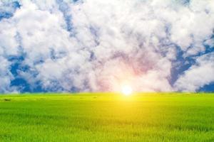 paddy vert et ciel photo