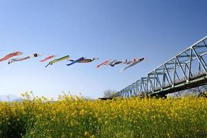 banderoles de carpe dans le ciel bleu