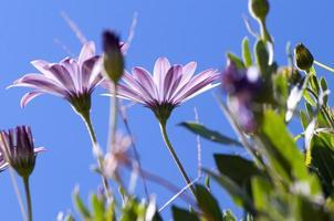fleur colorée sur fond de ciel bleu photo