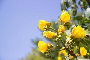 fleur jaune avec fond de ciel bleu photo