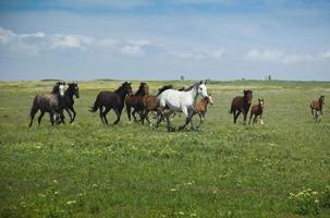chevaux en cours d'exécution / ciel bleu et herbe verte photo
