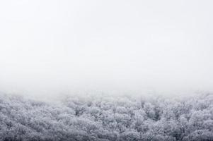 Limite forestière couverte de neige avec brouillard et ciel blanc