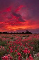 champ de coquelicots sous un ciel de feu photo