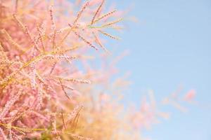 fleur d'arbre rose sur fond de ciel bleu, photo