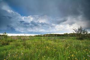 Ciel nuageux orageux sur marais fleuri