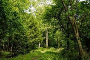 sentier dans les bois photo