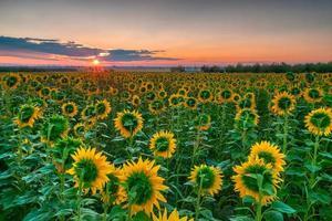 lever du soleil de tournesol photo