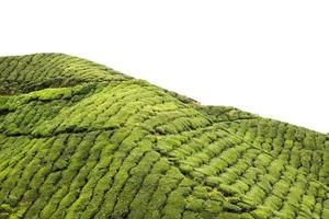 Contour d'une plantation de thé des Highlands avec ciel isolé photo