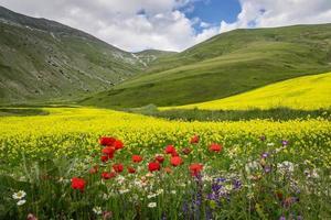 Castelluccio de Norcia - Ombrie - Italie