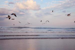 belle plage au lever du soleil. photo