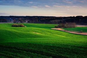 champ vert au printemps. paysage coucher de soleil photo